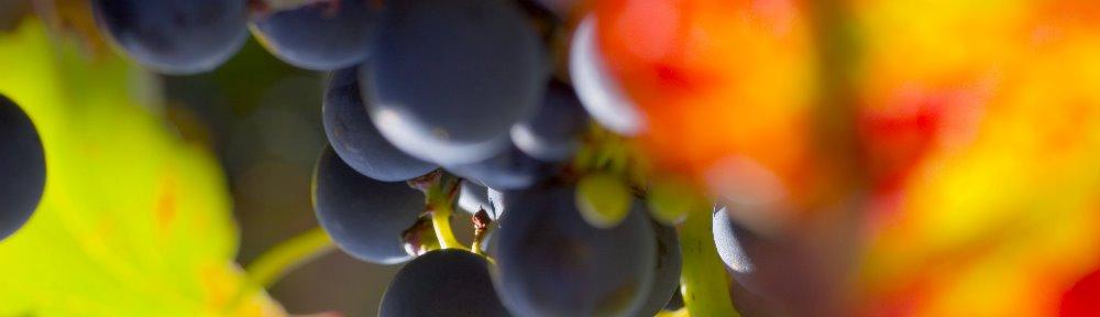 alles über Wein…..