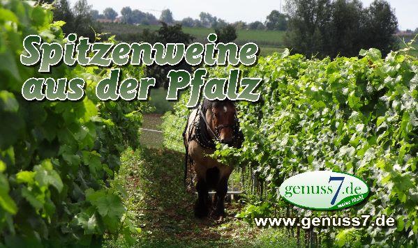 Spitzenweine aus der Pfalz