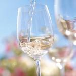 Sauvignon Blanc aus der Pfalz